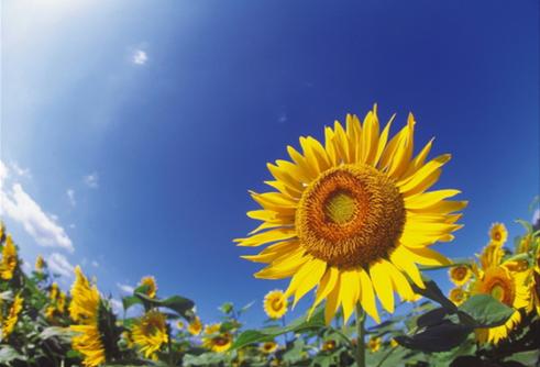 「夏 暑い」の画像検索結果